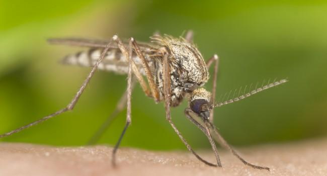 piqure-insecte